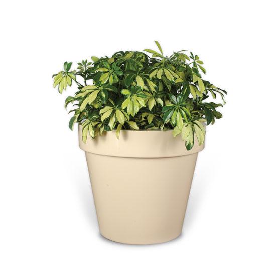 Trident Planter